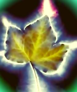 Wat is een aura: hoe ziet een aura eruit: op de afbeelding een blad van een boom waarop de aura middels Kirlian fotografie wordt aangetoond