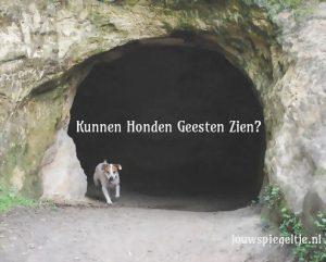 Kunnen honden geesten zien? Deze hond die uit een grot komt gerend lijkt iets te hebben waargenomen...