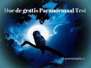 Doe hier de gratis Paranormaal Begaafd Test, wederom een wijze uil op de foto, deze keer bij nacht