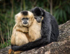 Wat is Spiegelogie: Jij bent al perfect, net als de twee aapjes op de afbeelding