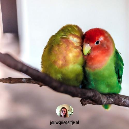 Iemand verliefd op je laten worden: 2 verliefde vogeltjes zitten op een tak